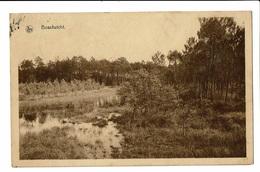 CPA - Carte Postale-Belgique - Lier - Boszicht 1937 S3023 - Lier