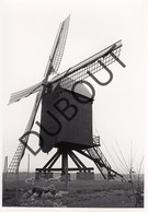 Gelrode - Aarschot Molen/Moulin Originele Foto C26 - Aarschot
