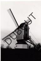 Bouwel Molen/Moulin Originele Foto C27 - Grobbendonk