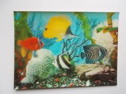Zeer Mooie 3-D Kaart , Aquarium Met Zeewatervissen, Geribde Kunststof Geeft Mooi Dieptezicht - Poissons Et Crustacés