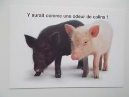 Y Aurait Comme Une Odeur De Calins !  / Starprint - Cochons