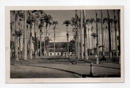 - CARTE-PHOTO CAYENNE (Guyane) - La Place Des Palmistes Et L'entrée De L'Hôpital - - Cayenne