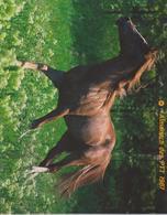 CALENDRIER PTT 1987 - Calendriers