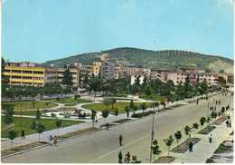 Albania / Albanie - Lushnja - Albanie