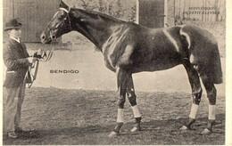 BENDIGO  - Cheval De Course - Chevaux