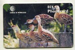 TK 35623 ANTIGUA & BARBUDA - Chip West Indian Tree Ducks - Antigua And Barbuda