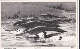 AP19 Animal Postcard - East African Game, Crocodile - RPPC - Animals