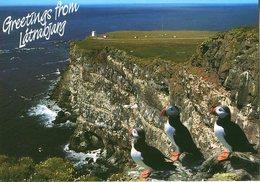 Iceland/Islande/Ijsland/Island Postcard Látrabjarg Puffins Unused - Iceland