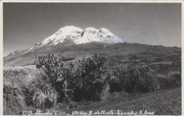 Amérique - Equateur Ecuador - El Chimborazo - Volcan - Plantes Cactus Raquettes - Carte-Photo - Ecuador