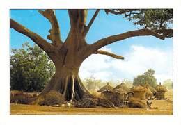 Afrique > SENEGAL Grand Fromager Et Greniers Dans Un Village Sérère (arbre Tree - Editions  MASQUES /ASCANI   *PRIX FIXE - Sénégal