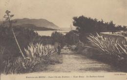 Plantes - Cactus Aloès - Le Brusc Six Fours 83 - Iles Des Embiez - Editeur Giraud Toulon - Cactus