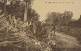 Plantes - Cactus Aloès - Hyères 83 - Jardin De La Ville - Cactus