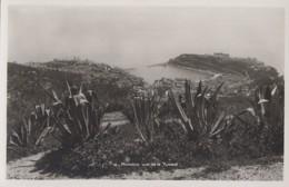 Plantes - Cactus Aloès - Monaco - Vue Sur La Turbie - Cactus