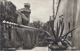 Plantes - Cactus Aloès- Espana - Islas Baleares - Palma De Mallorca - Escalera Muralla - Editeur Zerkowitz - Cactus