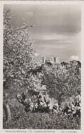 Plantes - Cactus Raquettes - Espana - Islas Baleares - Palma De Mallorca - Castillo De Bellver - Foto Guilera - Cactus