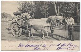 64 -Pays Basque- Un Attelage De Boeufs (bien Chargé De Pierres)- Tampons Postaux 1903 - Urrugne