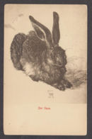 89937/ FAUNE D'EUROPE, Lièvre, Hase - Animals