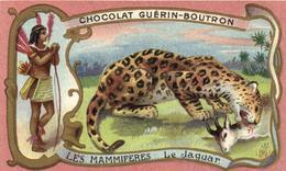 CHOCOLAT GUERINE BOUTRON.    Série Les Mammifères   :   Le Jaguar - Guérin-Boutron