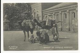 Group Of Camels * Karachi - Pakistan