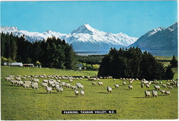 Farming, Tasman Valley (Mount Cook) - New Zealand - Sheep - New Zealand