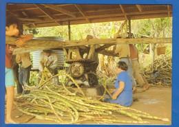 Pitcairn Island; Sugar Cane Grinding - Pitcairn