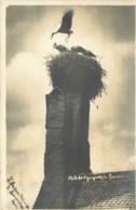 57 - SARREBOURG - Carte Photo D'un Nid De Cigognes En 1919 - Sarrebourg