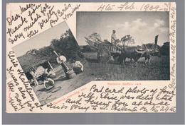 BURMA/ MYANMAR Burmese Pounding Rice, Buffalo Cart Ca 1910 OLD POSTCARD 2 Scans - Myanmar (Burma)