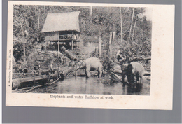MALAYSIA Elephants And Water Buffalos At Work Ca 1910 OLD POSTCARD 2 Scans - Malaysia