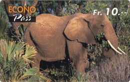 Telecarte SUISSE - ELEPHANT - Jungle