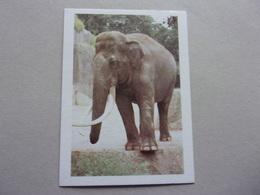 Image D'école Animaux éléphant - Oude Documenten