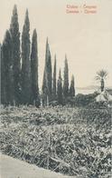 Croatia Dubrovnik, Ragusa 1909 / Trsteno Cempresi, Cannosa Cipressi / Uncirculated, Unused / Stengel 40501 - Croatia