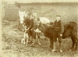 France Hucqueliers Paysans Ferme Cheval Vache Chien Ancienne Photo 1918 - Photographs