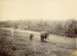 France Villers Un Dimanche à La Campagne Homme Et Chevaux Ancienne Photo 1900 - Photographs