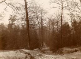 France Bois De Meudon Foret Ancienne Photo 1900 - Photographs