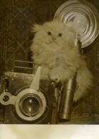 France Chat Persan Photographe Exposition Feline Ancienne Photo 1950 - Photographs