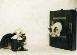 France Groupe De Chats Photographes Appareils Photo Ancienne Photo 1920's - Photographs