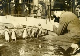Royaume Uni Photographe Au Zoo De Londres Pingouins Ancienne Photo 1920's - Professions
