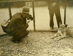 Royaume Uni Photographe Au Zoo De Londres Lion Lionne Ancienne Photo 1930 - Professions