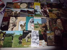 LOT DE 35 CARTES HUMORISTIQUES ANIMAUX - Cartoline