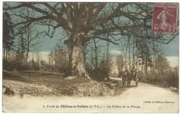 37 - Foret De Chateau La Vallière - Le Chene De La Vierge - Altri Comuni
