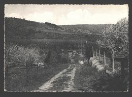 Godinne S/Meuse - Accueil Ste-Dorothée - Raccourci Vers Le Village - Nels Photothill - Yvoir