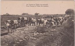 Asie :  TIBET : Du Yunnan  Au  Thibet , Les  Caravanes , Ane - Tibet