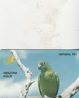 AMAZONA   AGILIS 13 - Jamaica