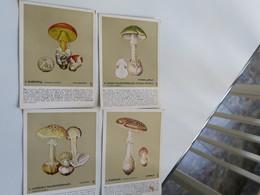 CH - Sammlung 36 Postkarten Für Das Sammeln - Pilze - Champignons - DR BERNH. HÖRMANN - - Albumes & Catálogos