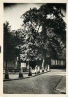 67 - BARR - Place Du Marché - Cpsm 10x15 - Barr