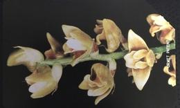Paco \ SIERRA LEONE \ SL-SLT-0014 \ Orchid 1 \ Usata - Sierra Leone