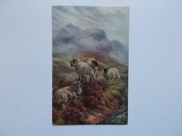 Kudde Schotse Zwartkop Schapen In De Highlands , Schilderij, Kustuitgave J. Salmon - Autres