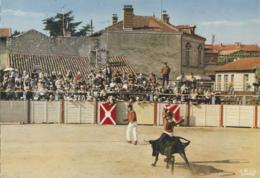 Sports - Folklore - Course De Vaches Landaises - Arènes - Postkaarten
