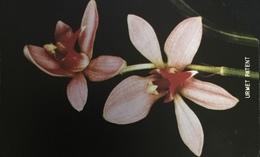Paco \ SIERRA LEONE \ SL-SLT-0016 \ Orchid 3 \ Usata - Sierra Leone