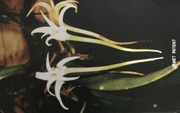 Paco \ SIERRA LEONE \ SL-SLT-0017 \ Orchid 4 \ Usata - Sierra Leone